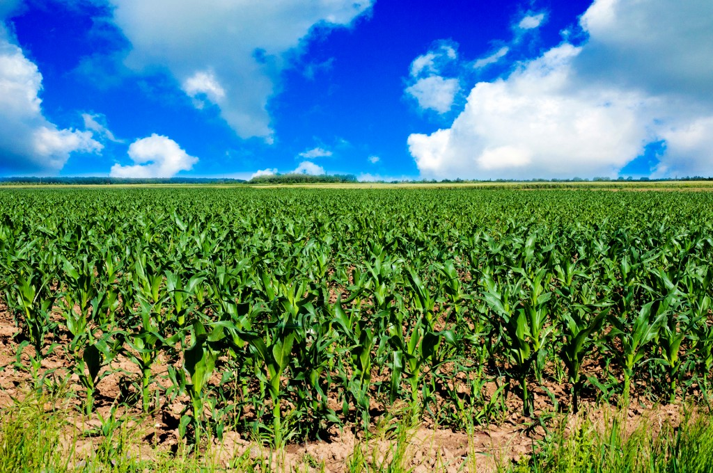 Farmland Values Expected to Decline-media-1