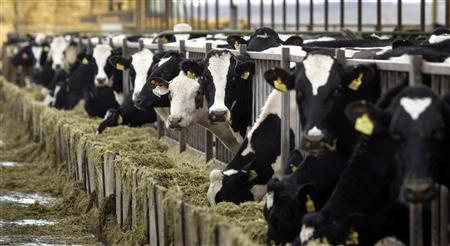 First Beef, Now Dairy Reach Agreement with China-media-1
