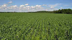 Some Corn Belt Farmland Values are Stabilizing-media-1
