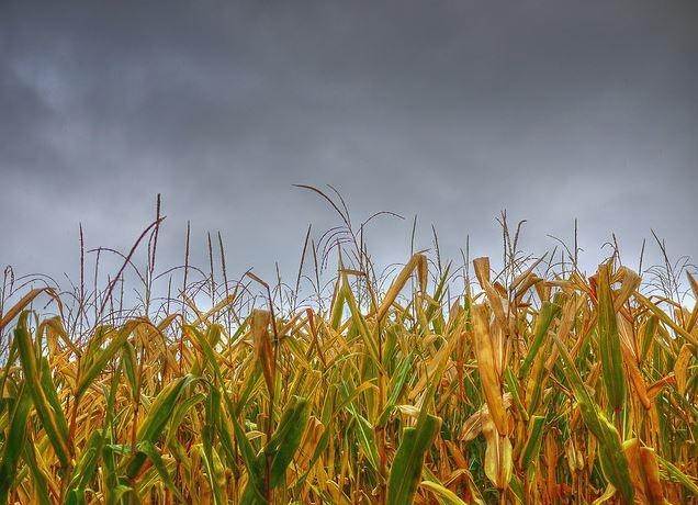 Indiana Harvest Weather Looks Wet-media-1