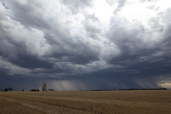 Heavy Rain Hits Fields Ready for Harvest-media-1