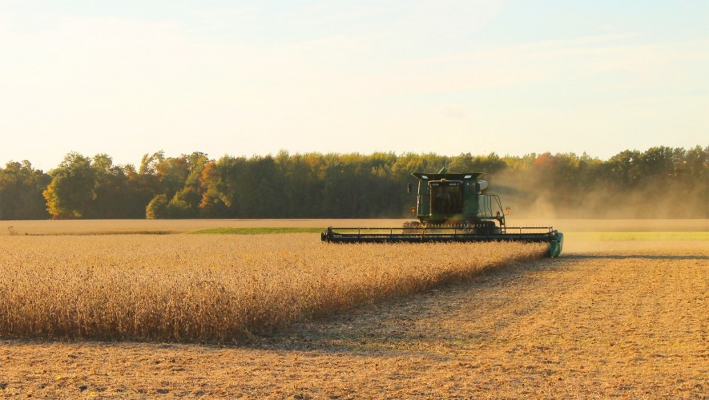 China May Be Getting U.S. Soybeans Through the Backdoor-media-1