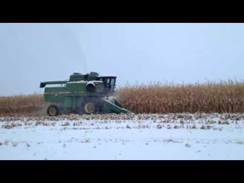 corn-in-snow