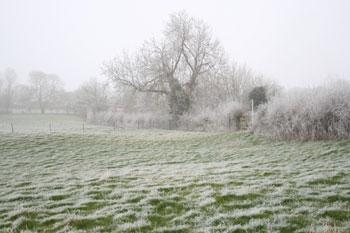 frost-field