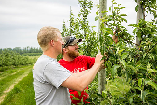 specialty crop, apple, cherry