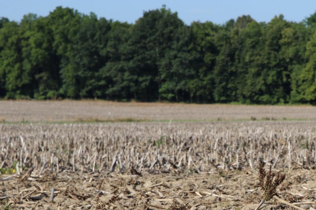 Unplanted field. Photo: Michigan Farm Bureau