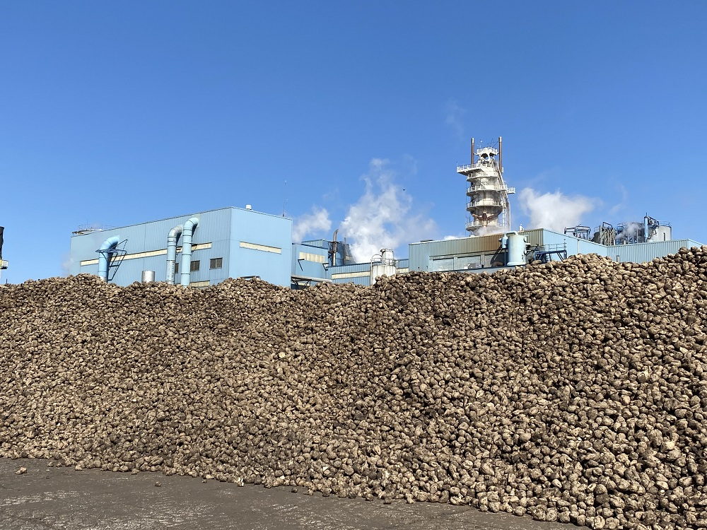 Sugarbeet pile in Bay City. Photo: Michigan Sugar