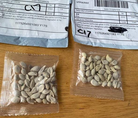 China mystery seeds