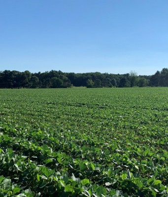 soybeans, weather, sun