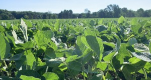 Soybeans, weather