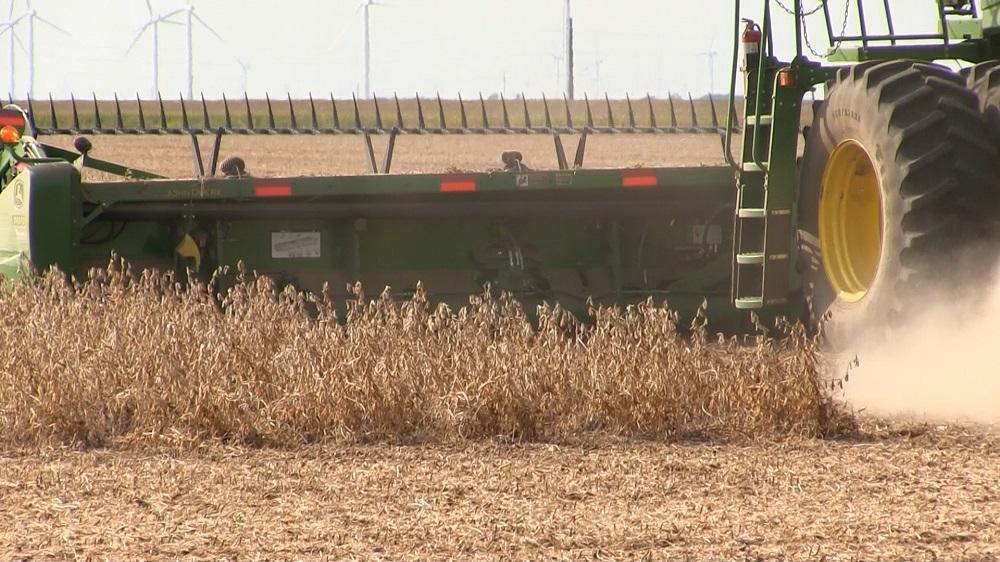 Soybean harvest-1-2020